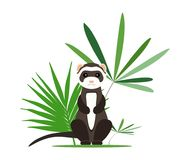 Gray ferret in full growth sits in tropical leaves. Vector illustration. Gray ferret in full growth sits in tropical leaves. Vector illustration Stock Photography