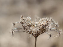 Gray flower. On the blured backgrouned stock images