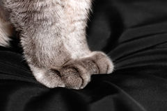 Gray fluffy cat paws closeup Royalty Free Stock Images