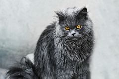Gray fluffy coat Stock Photos