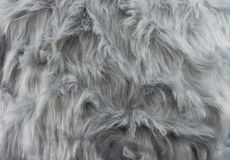 Gray fur pattern Stock Photography