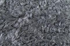 Gray fur Royalty Free Stock Photo