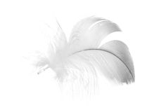 Gray furry feather on white Stock Photography