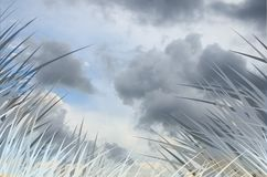 Gray grass Stock Photography