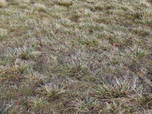 Gray of grass background. texture of green grass.  stock illustration
