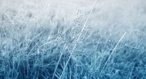 Gray  grass flower and grass  fields  spring ,autumn abstract ba. Ckground Stock Image