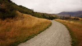 Gray Gravel Road and Brown Weeds Stock Photo