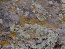 Gray, Green, Black, Lichen on rock, symbiotic combination of a fungus with an algae or bacterium, close up, macro in fall on the Y. Ellow Fork and Rose Canyon stock photos