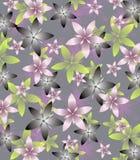 Gray Green e fiori rosa su fondo leggero Immagini Stock Libere da Diritti
