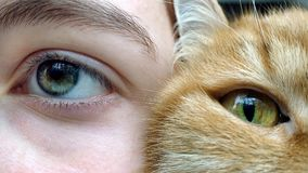 Gray-green human eye and yellow-green eye of a red cat. Close-up royalty free stock images