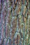 Gray green texture of old tree bark Stock Photos