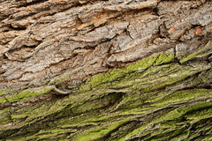 Gray and green tree bark Royalty Free Stock Photos