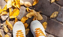 Free Gray Grey Sport Shoes Sneakers On The Background Of Dry Yellow Leaves On The Sidewalk In Autumn Fall On A Sunny Day Royalty Free Stock Image - 192364996
