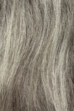 Gray Hair Closeup Stock Photo