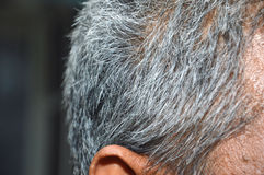 Gray hair Stock Image