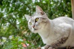Gray british haircut cat in the green garden Stock Photo