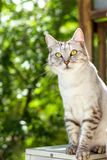 Gray cat sitting on green garden blurred background Royalty Free Stock Image