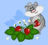 A gray hamster with a berry in the paws stands in strawberry bushes. Illustration on a blue background. stock images