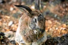 Gray hare in green grass. stock photos