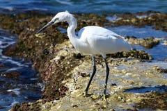 Gray heron on the beach Stock Image