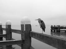 Gray heron on berth Stock Images