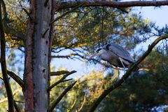 Gray heron in the forest Royalty Free Stock Image