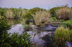 Gray Heron - parco nazionale dei terreni paludosi Fotografia Stock