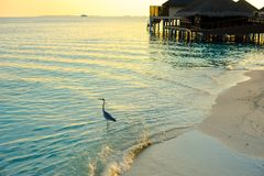Gray Heron Standing on Large Clear Body of Water stock photography