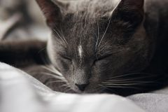 Gray home cute cat sleeping soundly stock image