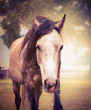 Gray horse on autumn nature background, close up portrait Royalty Free Stock Photo