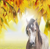 Gray horse on  background of sunny autumn foliage Stock Images