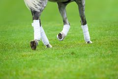 Gray horse on a dressage lesson Stock Photo