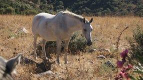 Gray horse in grassland Stock Photos