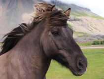 Gray horse head. A grey horse in the pasture Stock Photo
