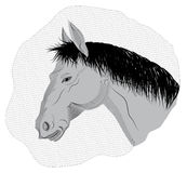 Gray horse. Head of a young horse on the background grid stock illustration