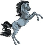 Gray horse Royalty Free Stock Images