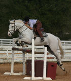 Gray horse jump. A gray horse jumping over an oxer Royalty Free Stock Images