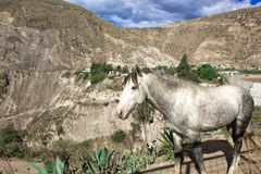 A gray horse in nature, in the background of a mountain and a beautiful landscape. stock images