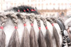 Gray horse neck with plaited mane. Outdoors. Royalty Free Stock Photos
