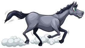 A gray horse running Royalty Free Stock Photo