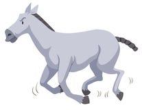 Gray horse running on white Royalty Free Stock Photos