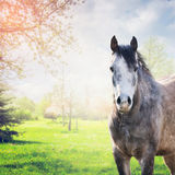 Gray horse stand looking at camera over spring nature background Stock Image