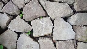 Gray, huge, flat, uneven stones, bricks lie on the ground without cementing. There is grass and deep cracks between rocks. For stock photography