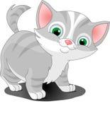 Gray_kitten. Little gray cat standing looking