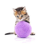 Gray kitten. Royalty Free Stock Images