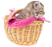 Gray kitten in a basket Stock Photo