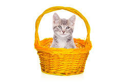 Gray kitten in a basket Stock Photography