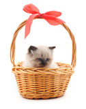 Gray kitten in a basket. Royalty Free Stock Images