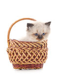 Gray kitten in a basket. Royalty Free Stock Image