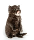 Gray kitten begging Royalty Free Stock Photography
